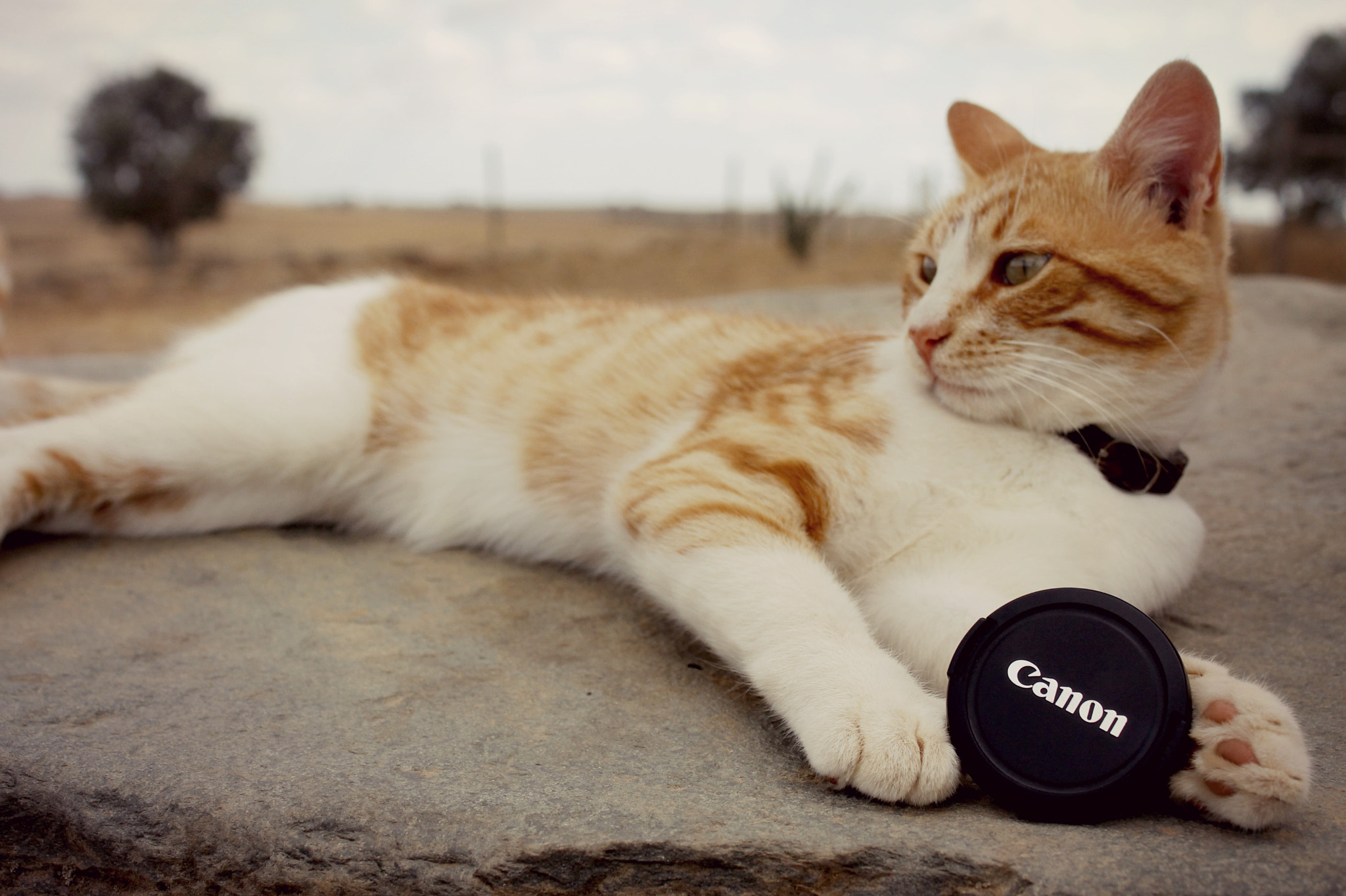 Photograph Cat&Canon III by Rita  A.  on 500px