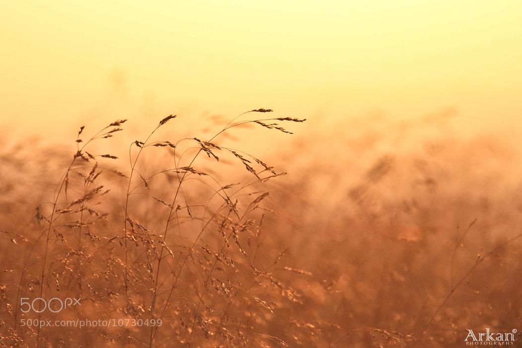 Photograph 2622 by Arkan Aghbar on 500px