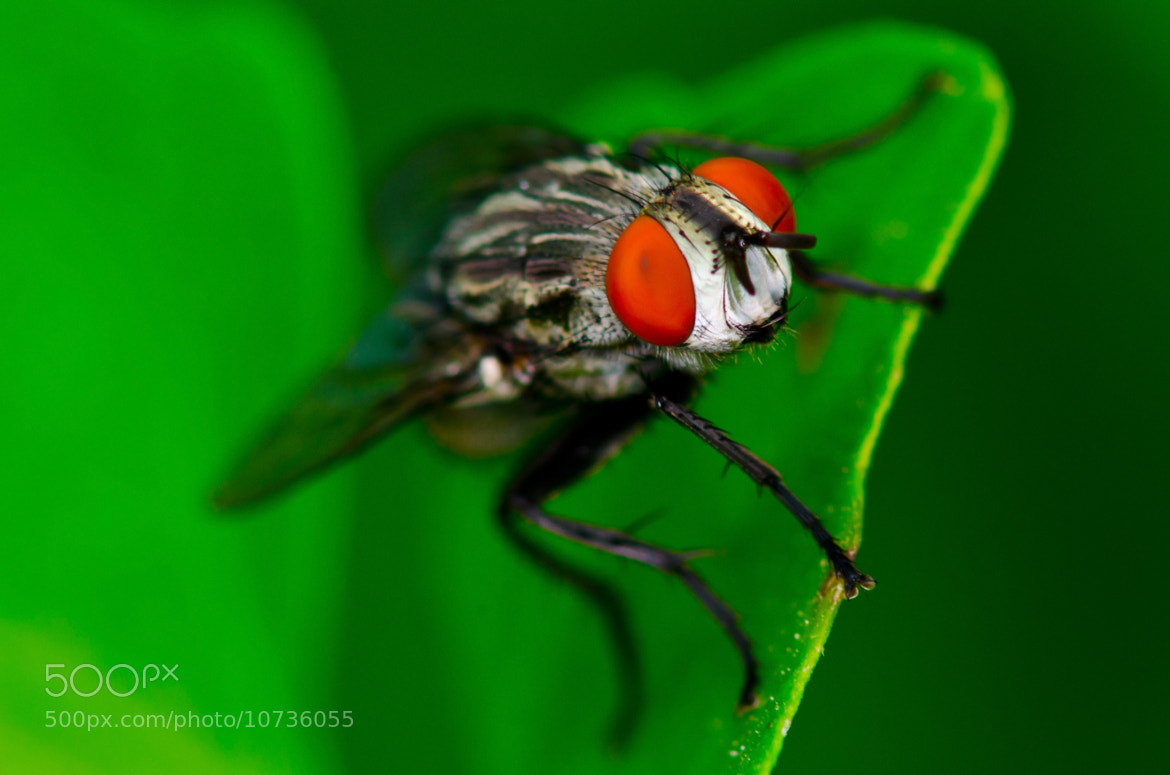 Photograph A large fly by Anthony de Leon on 500px