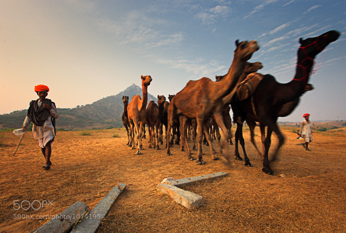Photograph Camel traders by Atish Sen on 500px