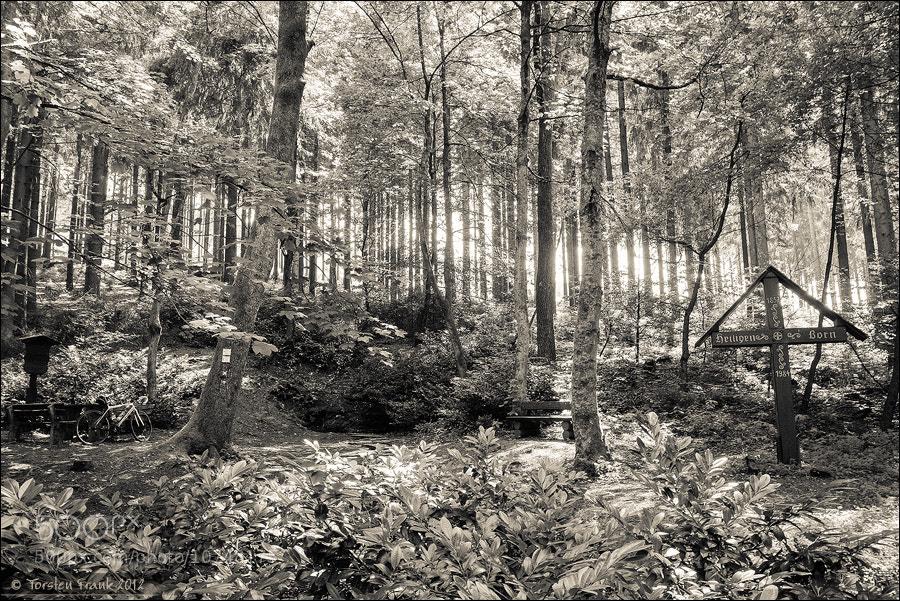 Photograph Heiligenborn Forest spring  by Torsten Frank on 500px