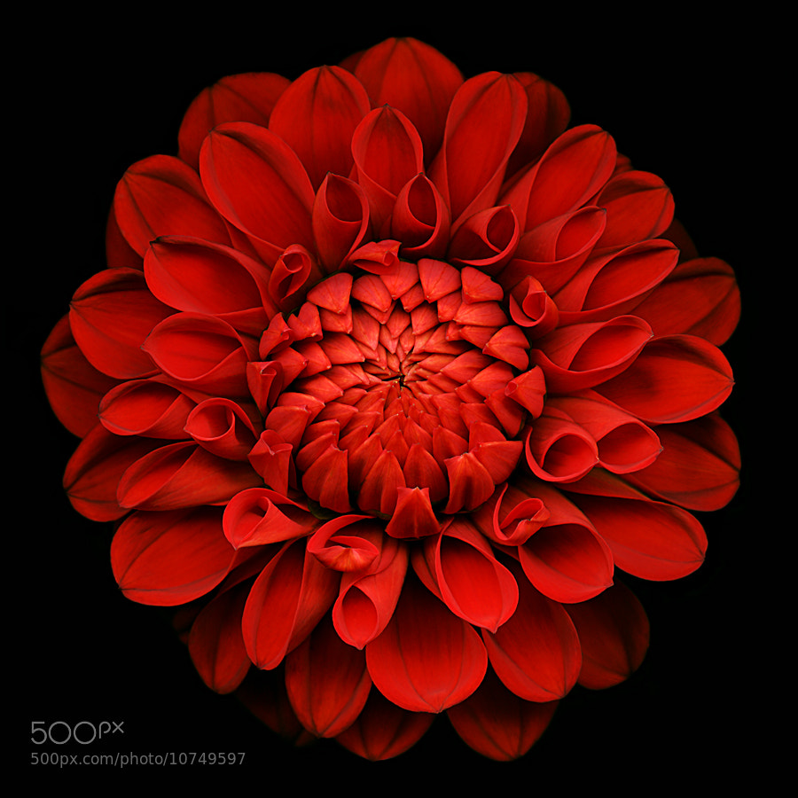 Photograph Opus in red by Kate Scott on 500px