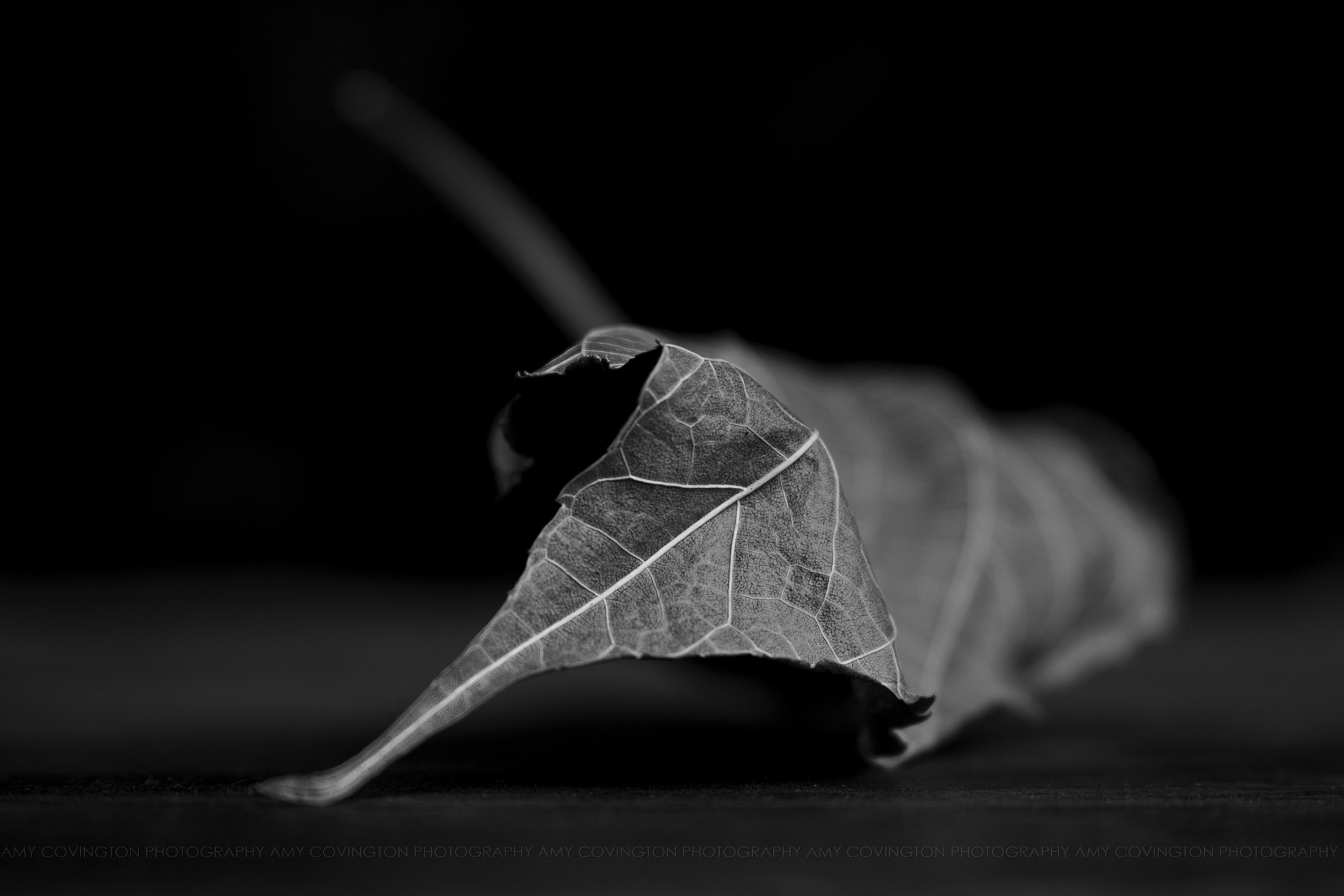 Photograph 146/365 : The sleeping leaf by Amy Covington on 500px