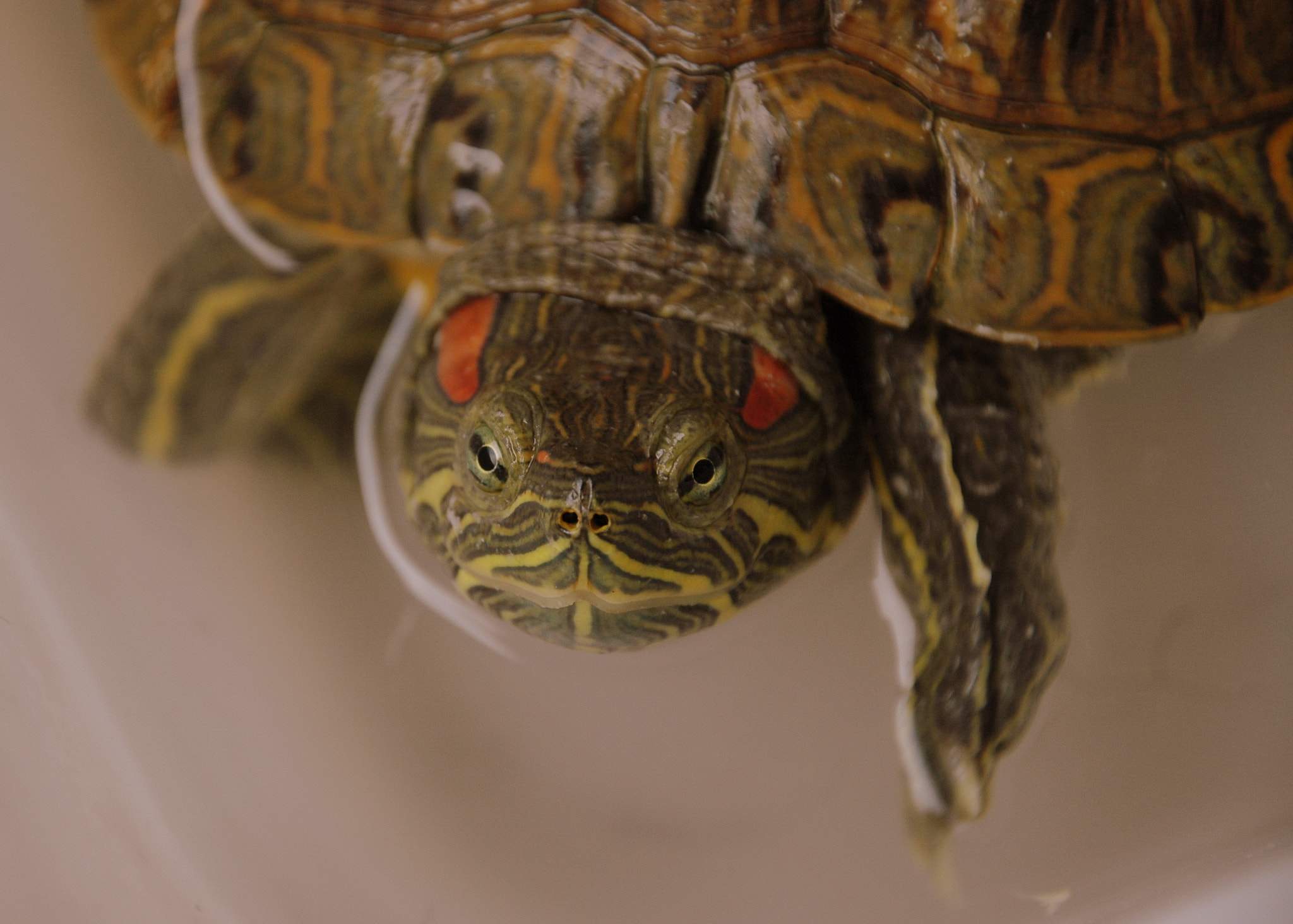 Photograph CURIOUS TURTLE by Sushila C. on 500px