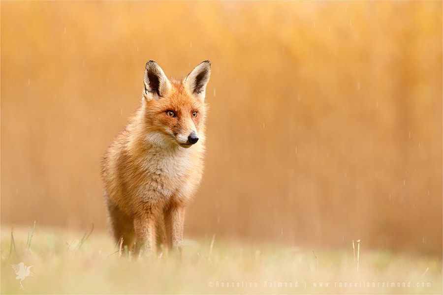 Blending in or Standing Out (From the Crowd) by Roeselien Raimond on 500px.com