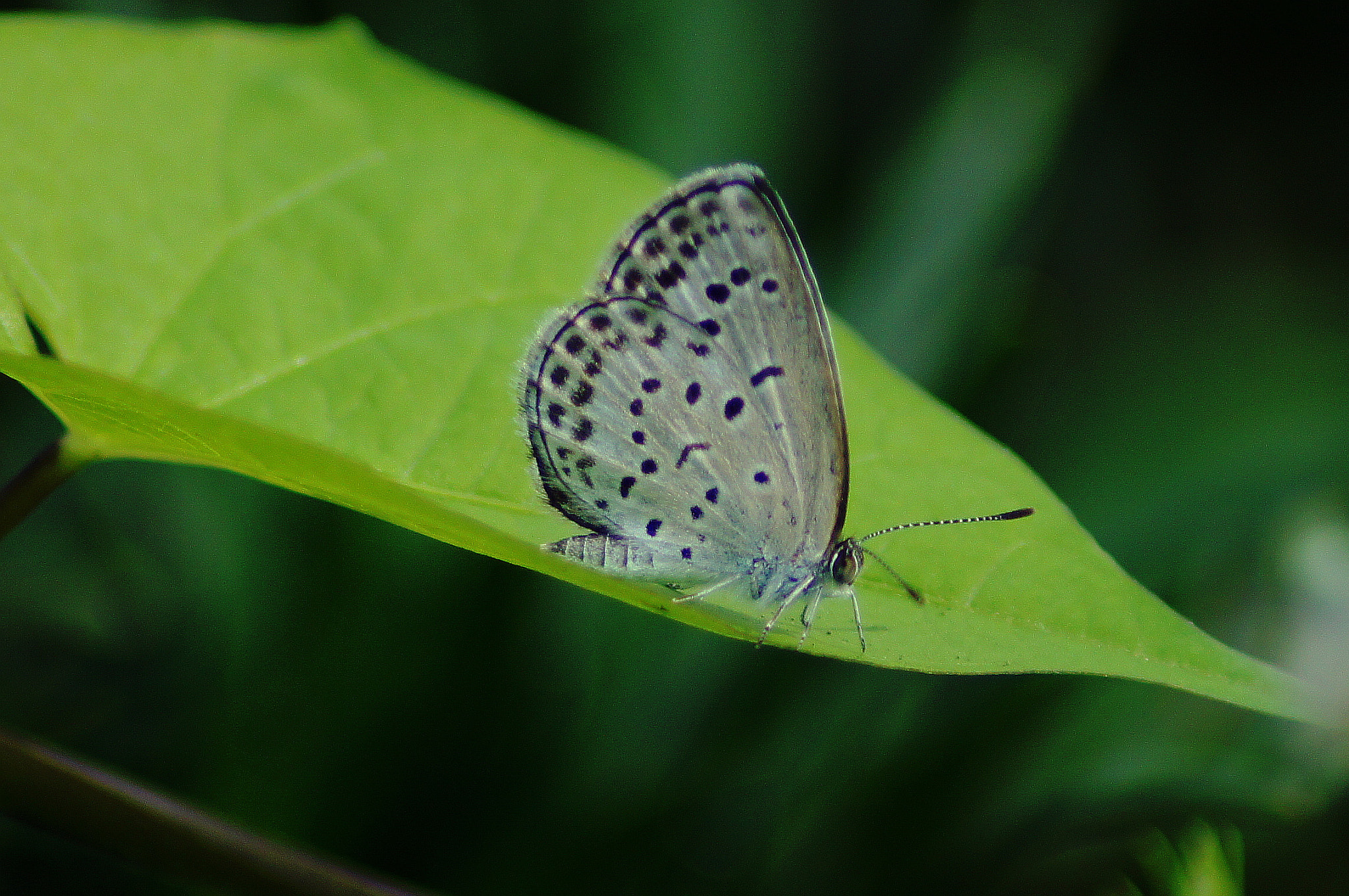 Photograph Tokyo Butterfly by Matthew Pearce on 500px