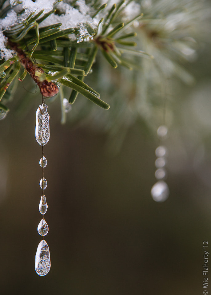 Photograph Ice Drops by Michael Flaherty on 500px