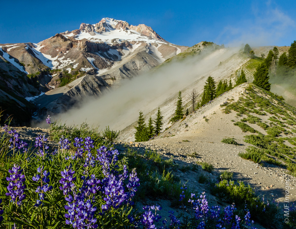 Photograph Lupine Ridge by Michael Flaherty on 500px