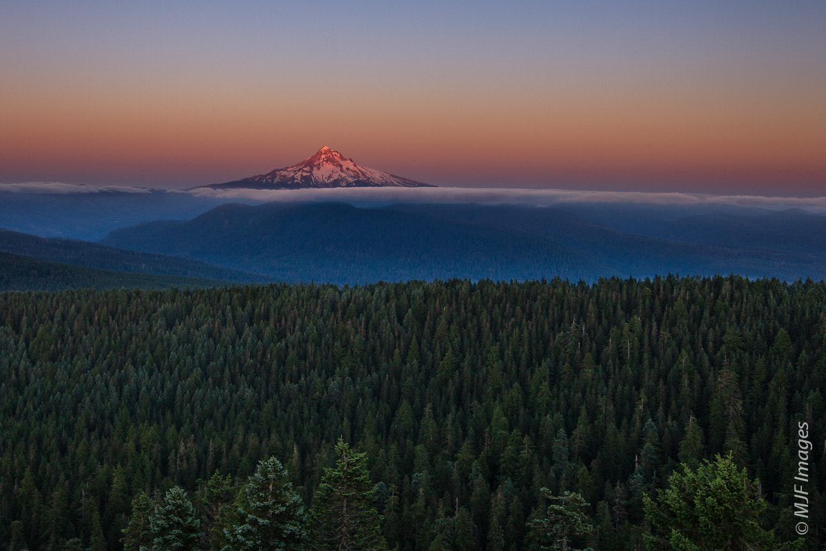 Photograph Hood's Forest by Michael Flaherty on 500px