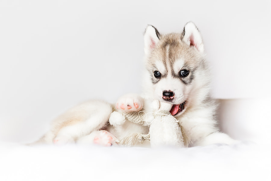 Puppy Images - Merlin by Irene Mei on 500px.com