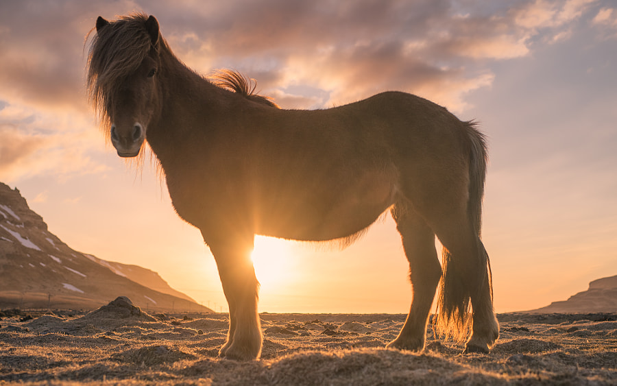 Photograph My Little Pony by Evgeny Tchebotarev on 500px