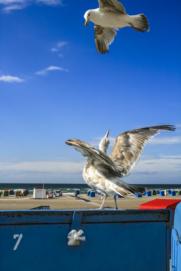 FLY WITH ME by Willi Meister on 500px.com