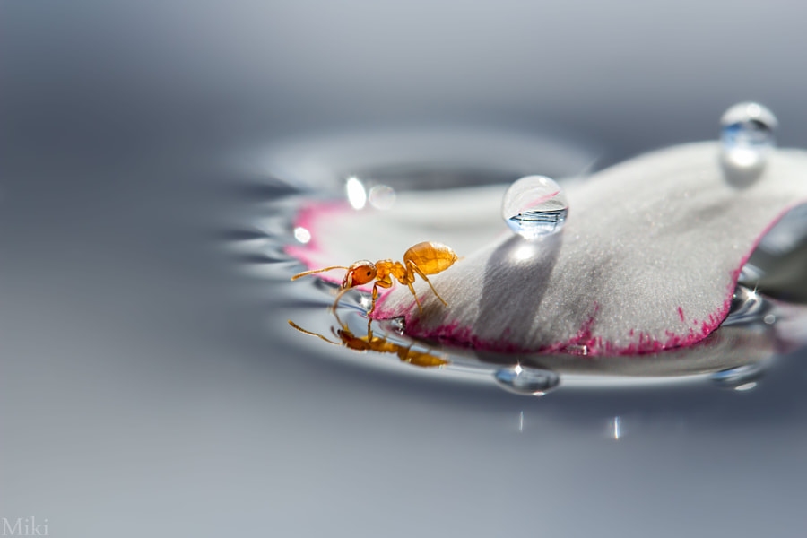 Photograph Ant in Wonderland by Miki Asai on 500px