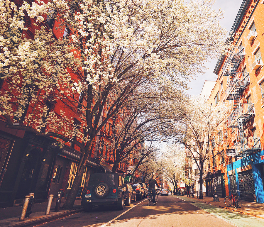 most beautiful cities in the world -Springtime in NYC by Vivienne Gucwa on 500px.com