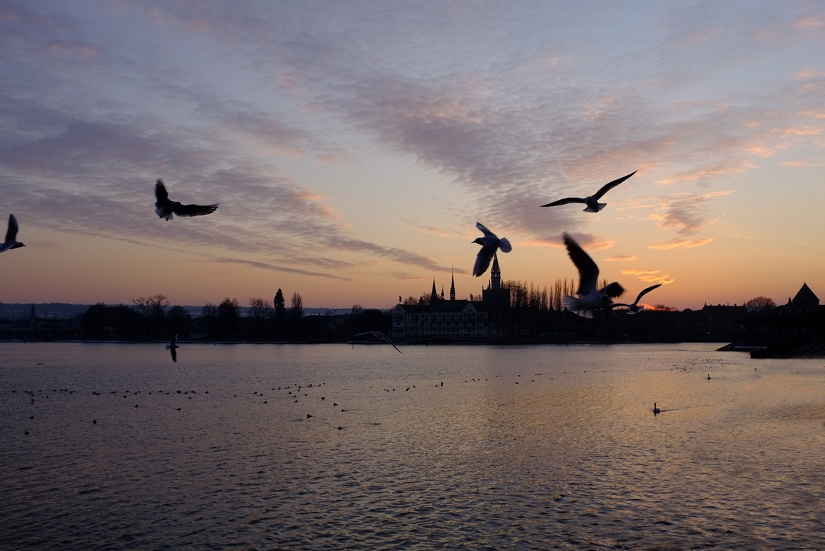 Photograph Birds over Lake Constance by Tom LeRoy on 500px