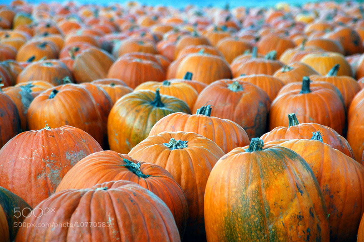 Photograph Pumpkins by Peach Jones on 500px