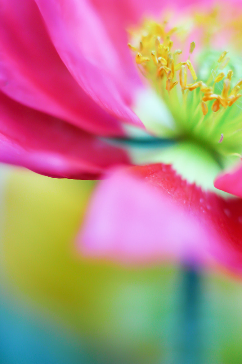Photograph Pink Flower by Bonnie Samuel on 500px