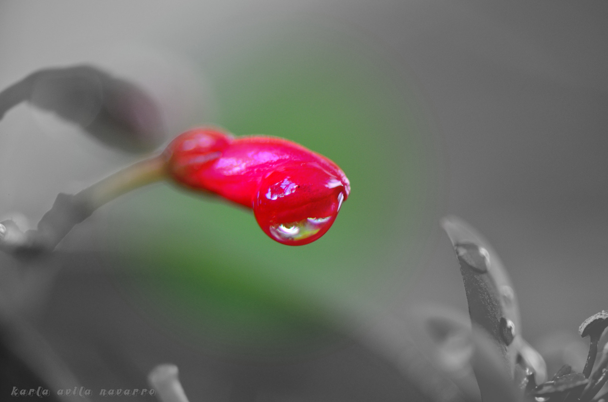 Photograph for the love of a hanging drop by karla avilanavarro on 500px
