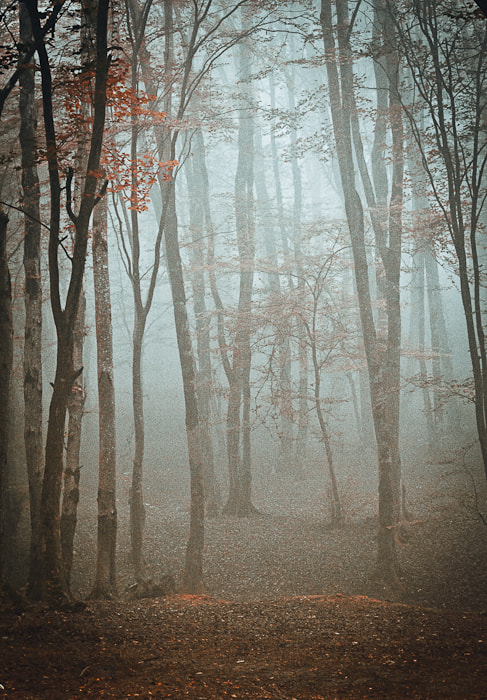 Photograph Mystic Forest by Mohammad Khalili on 500px