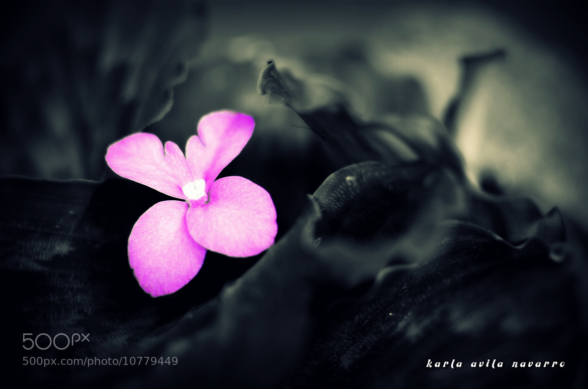 Photograph little violets by karla avilanavarro on 500px