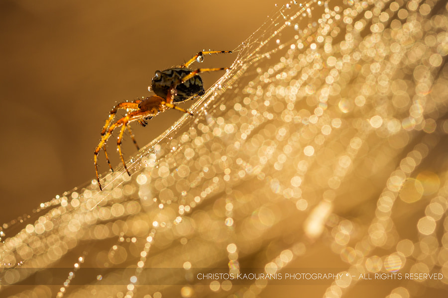 Treasures of the morning dew by Christos Kaouranis on 500px.com
