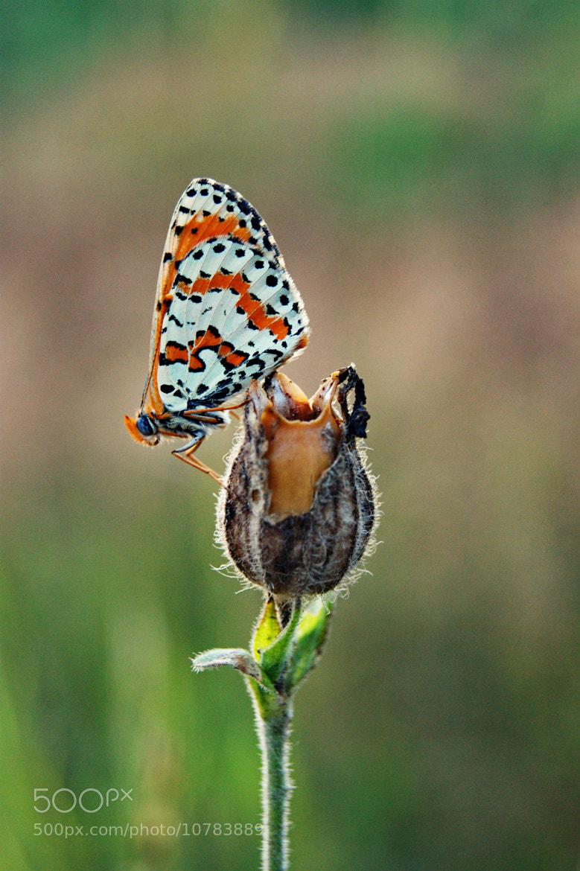 Photograph Sleepy butterfly by Ekaterina Elizarova on 500px