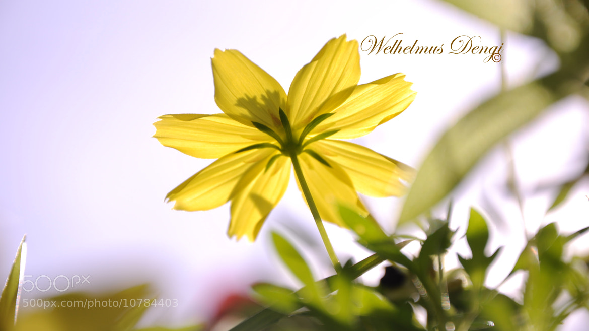 Photograph 011 by Welhelmus Dengi on 500px