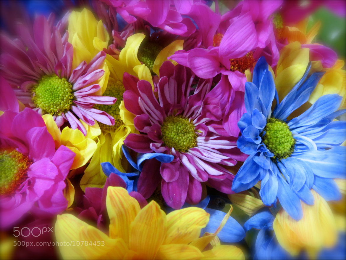 Photograph Colorful flowers by Lori Conklin on 500px