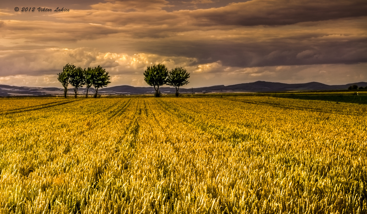 Photograph The Field Is Alive by PhotonPhotography -Viktor Lakics on 500px