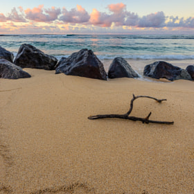 Driftwood and rocks on Poipu Beach, Kauai