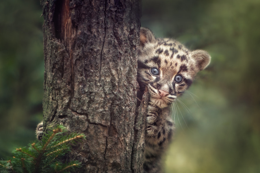 Photograph Peek-a-boo by Manuela Kulpa on 500px