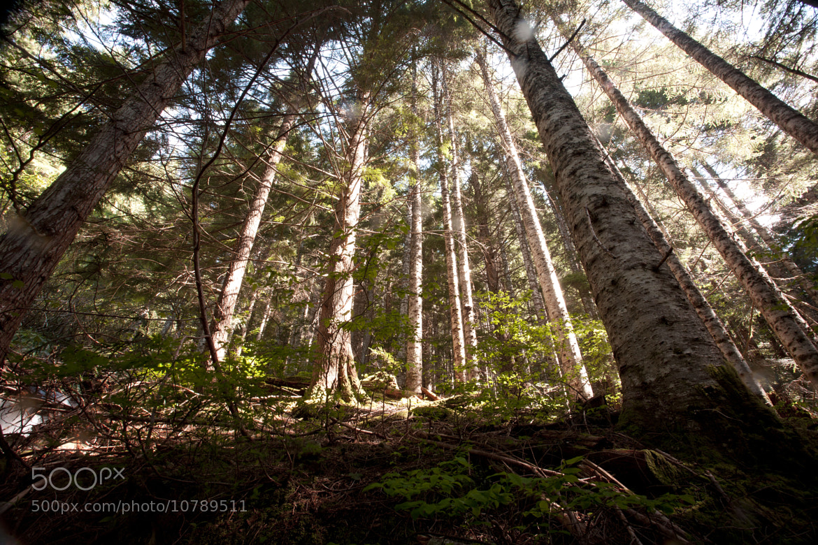 Photograph Cascade Forest by Jolee Nebert on 500px