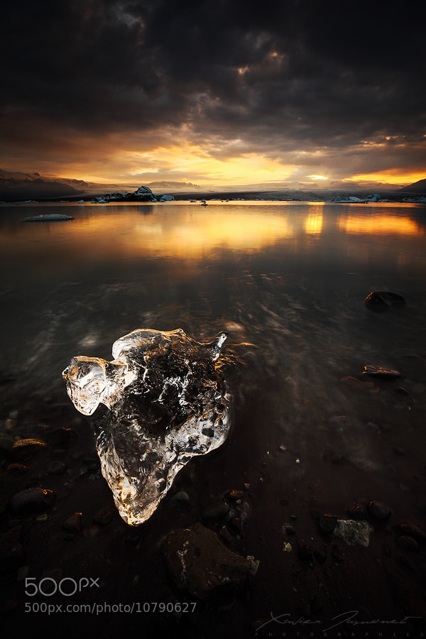 Photograph Frozen lifeforms by Xavier Jamonet on 500px