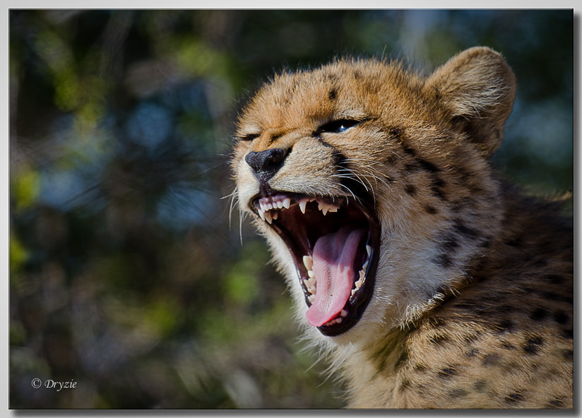 Photograph Just brushed Mom... by Mark Drysdale on 500px