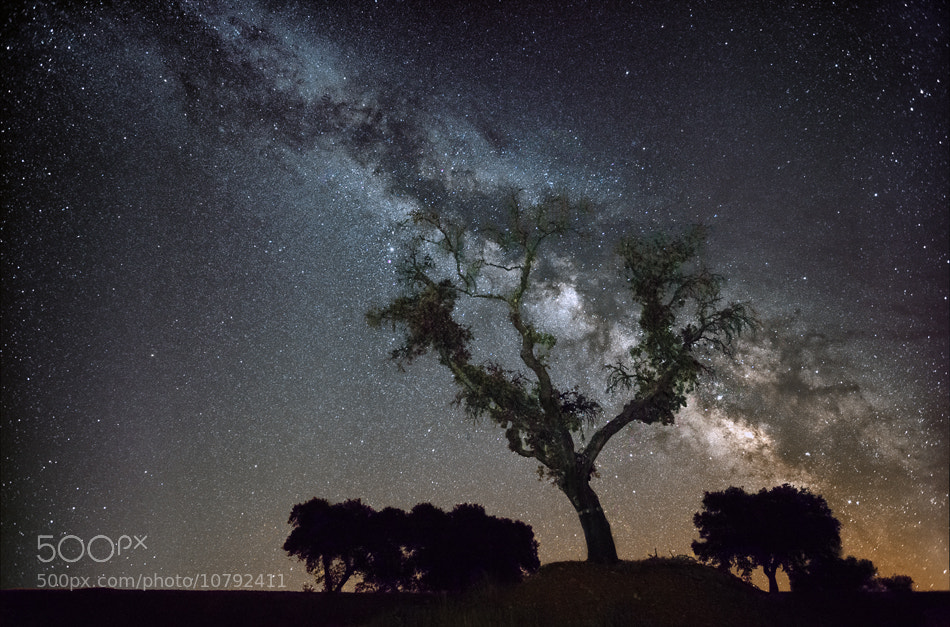 Photograph Milky Way Tree by Jorge  Feteira on 500px