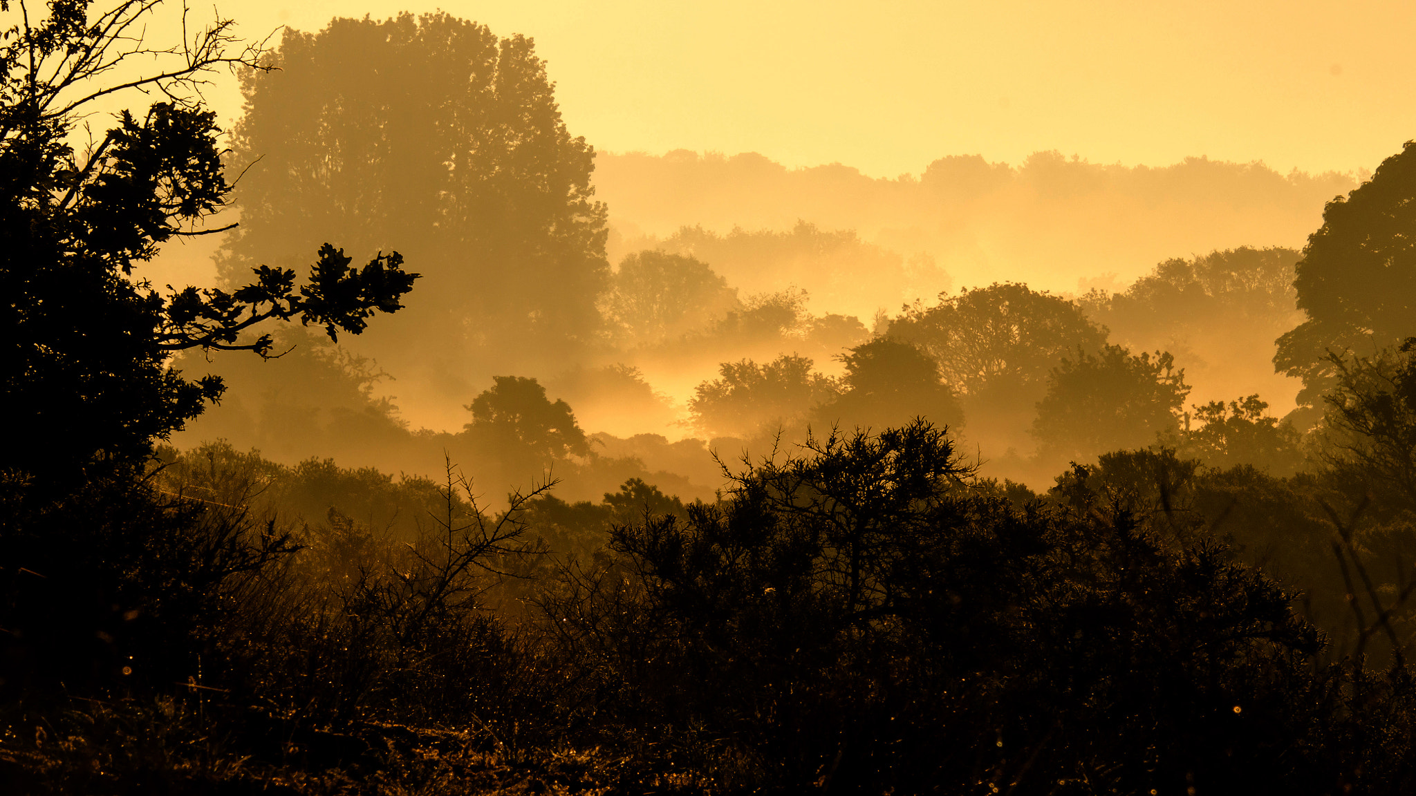 Photograph First light in the dunes by Robert Bulten on 500px