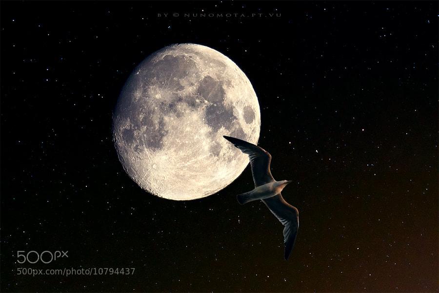 Photograph the adventurer by Nuno Mota on 500px