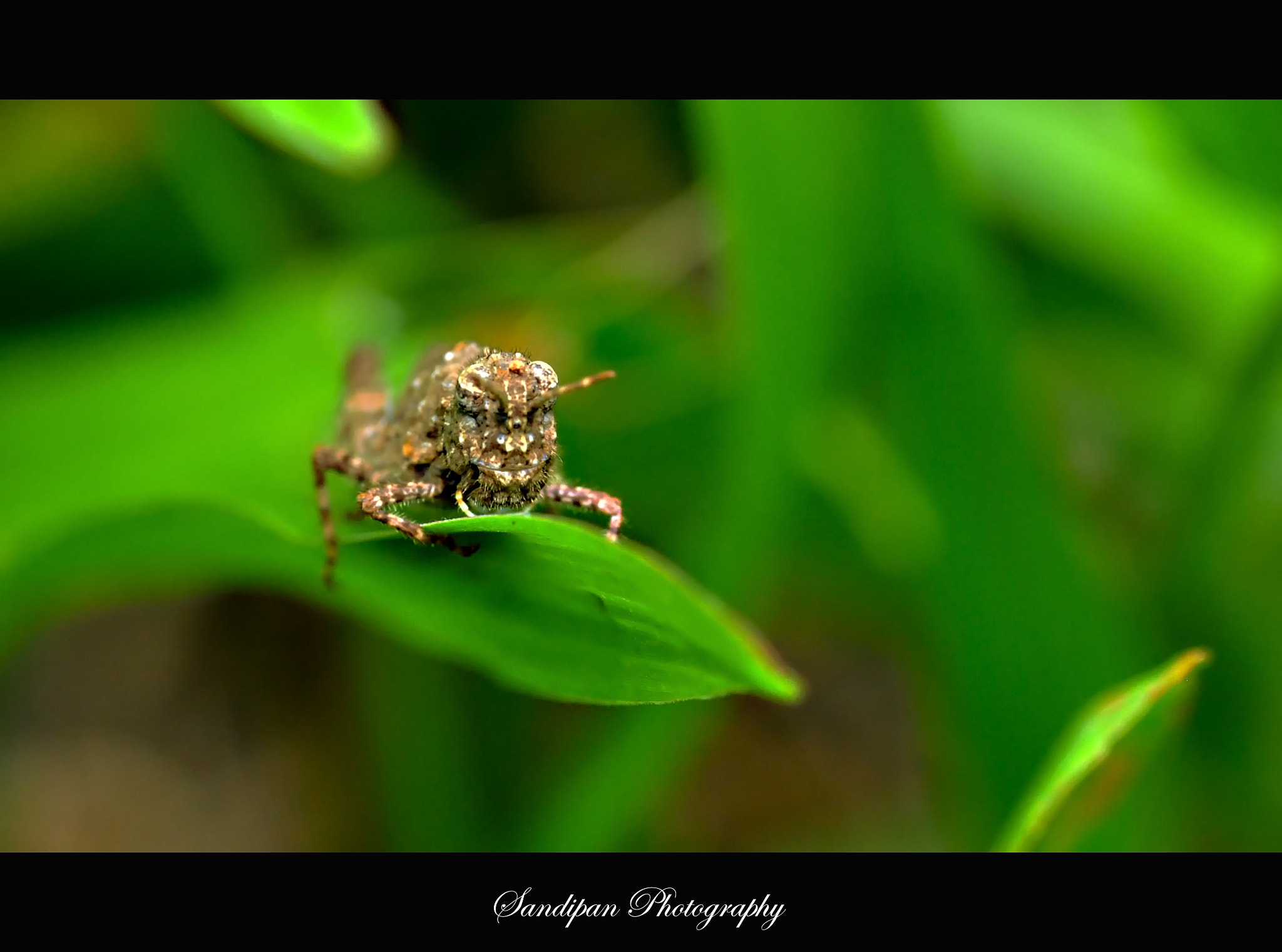 Photograph I am here by Sandipan Bhattacharya on 500px