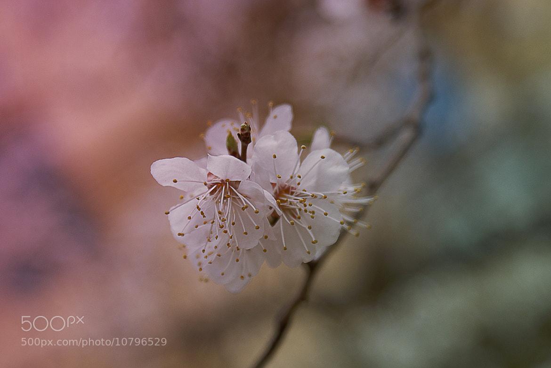 Photograph flower by Anastasia Arefieva on 500px
