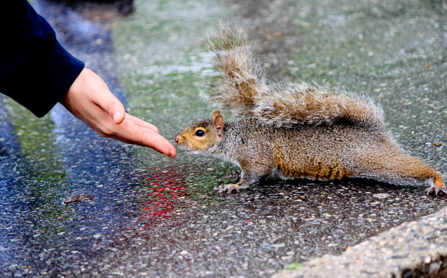 Feeding the friend