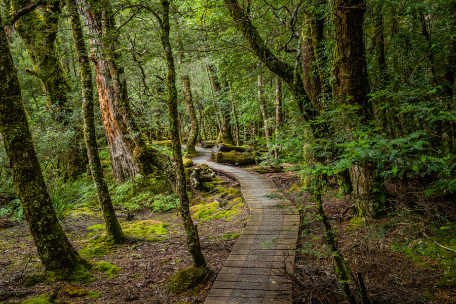 Tasmanian rainforest by Nicholas Shera on 500px.com