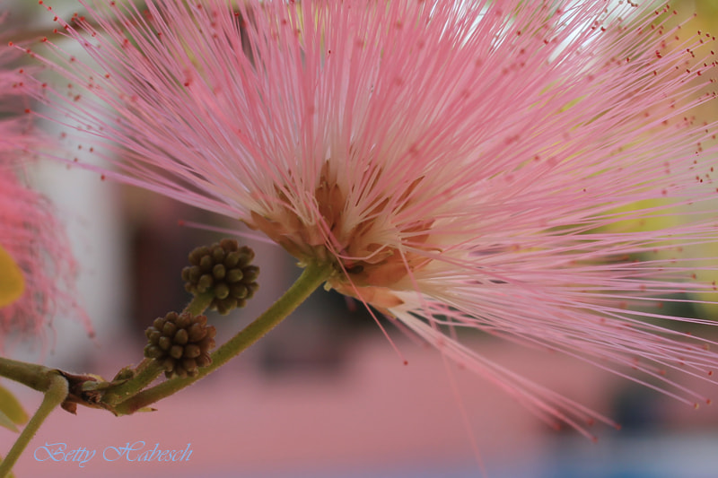 Photograph Serene Pink by Betty Habesch on 500px