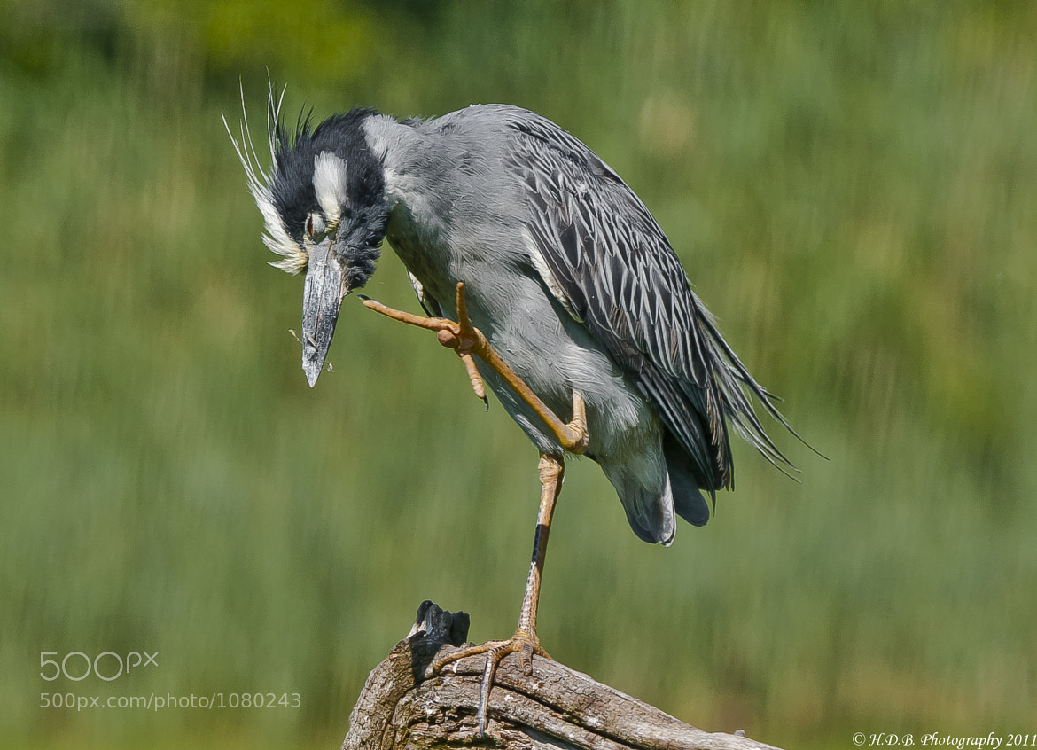 Photograph The Itch by Harold Begun on 500px