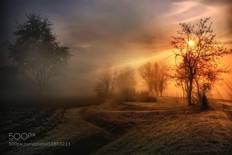 Photograph Winterland by Maurizio Fecchio on 500px