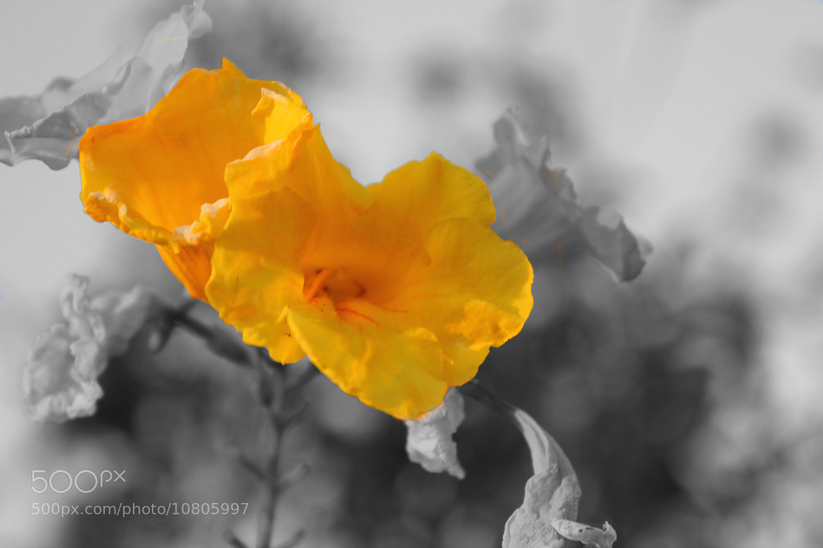 Photograph Color in colorless by Mihir Dhandha on 500px