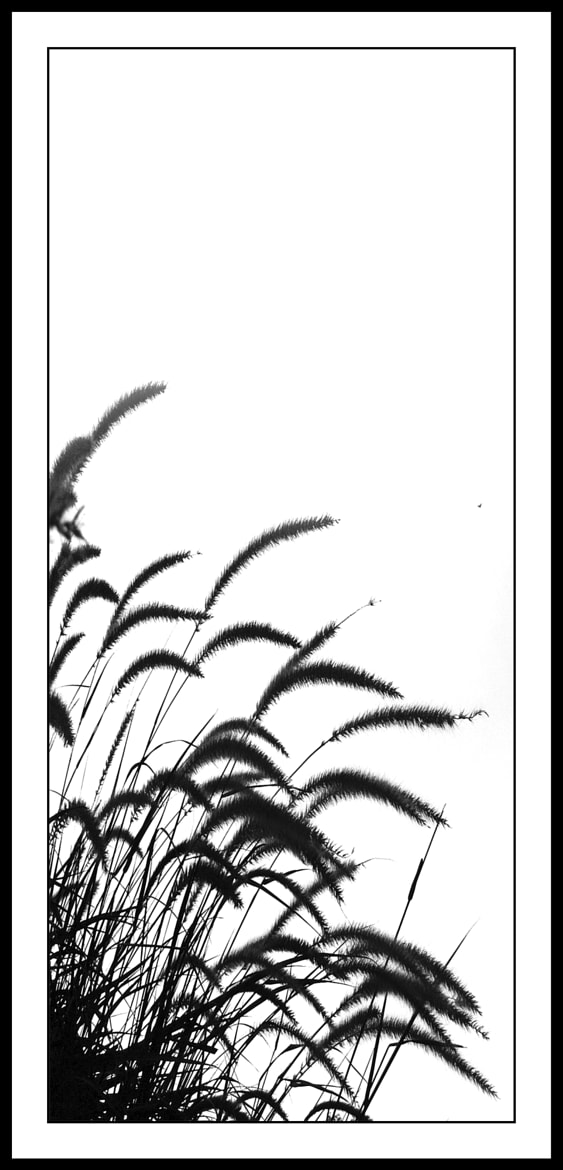 Photograph Black & White Drawing-Reeds by Jong Shin Lee on 500px