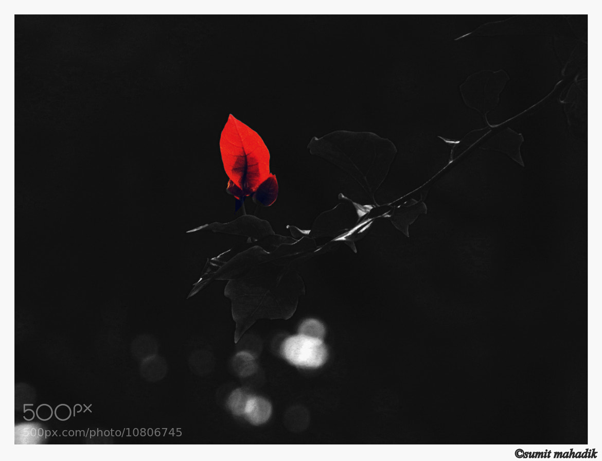 Photograph Red... by Sumit Mahadik on 500px