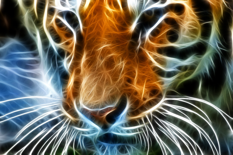 Photograph Neon Tiger by jamil ghanayem on 500px