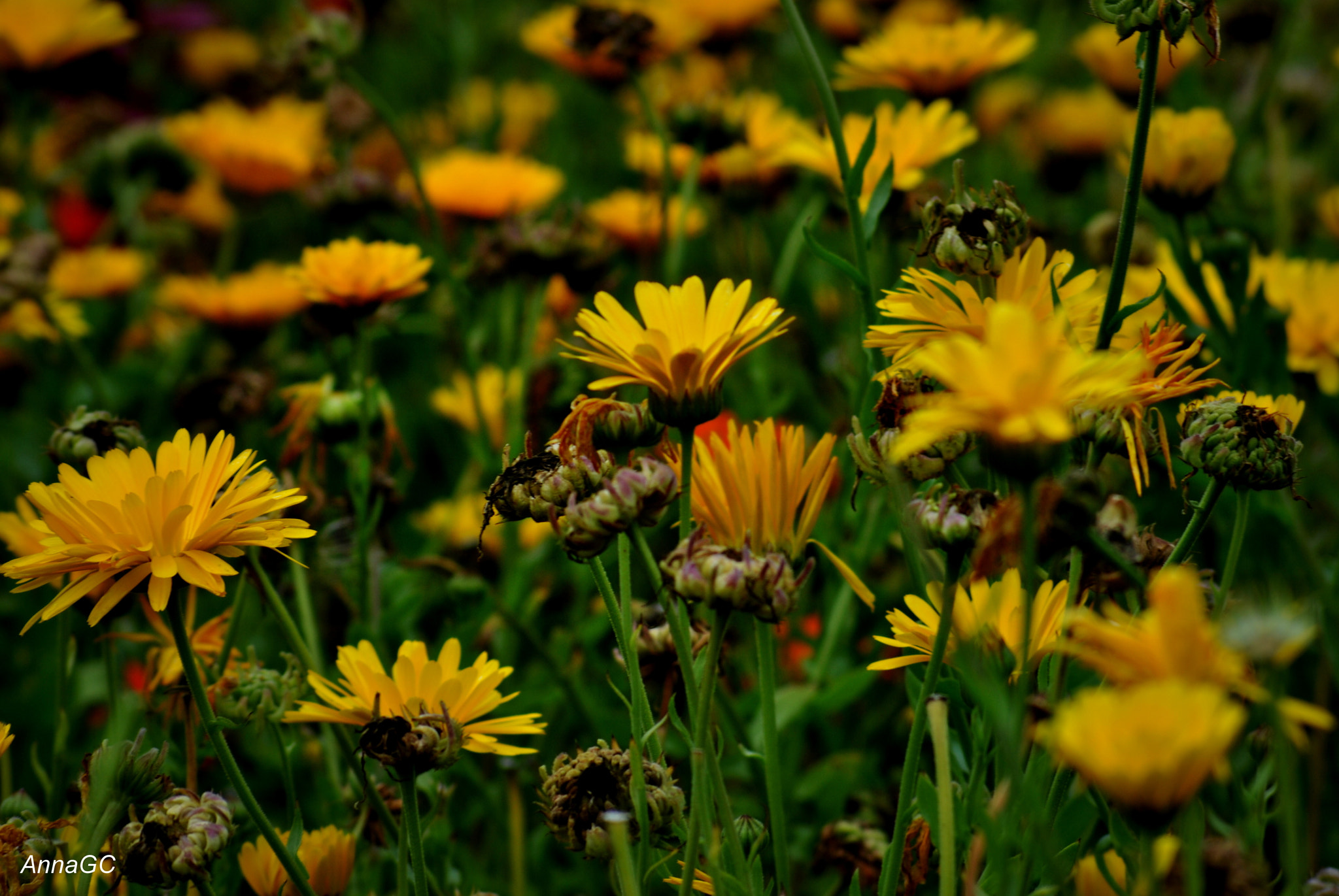 Photograph Yellow flowers by Anna Garcia on 500px