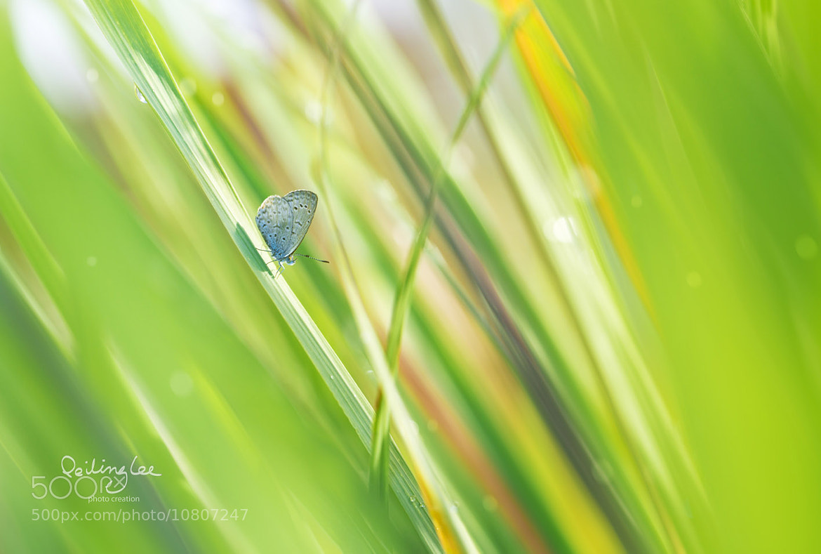 Photograph Scent of the Lemon Grass by Lee Peiling on 500px